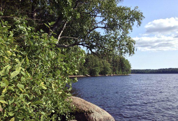 Природа озеро Пионерское