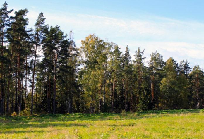 Земельные участки Озеро Пионерское